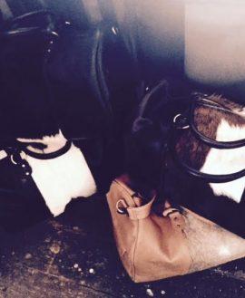 Cow hide bags